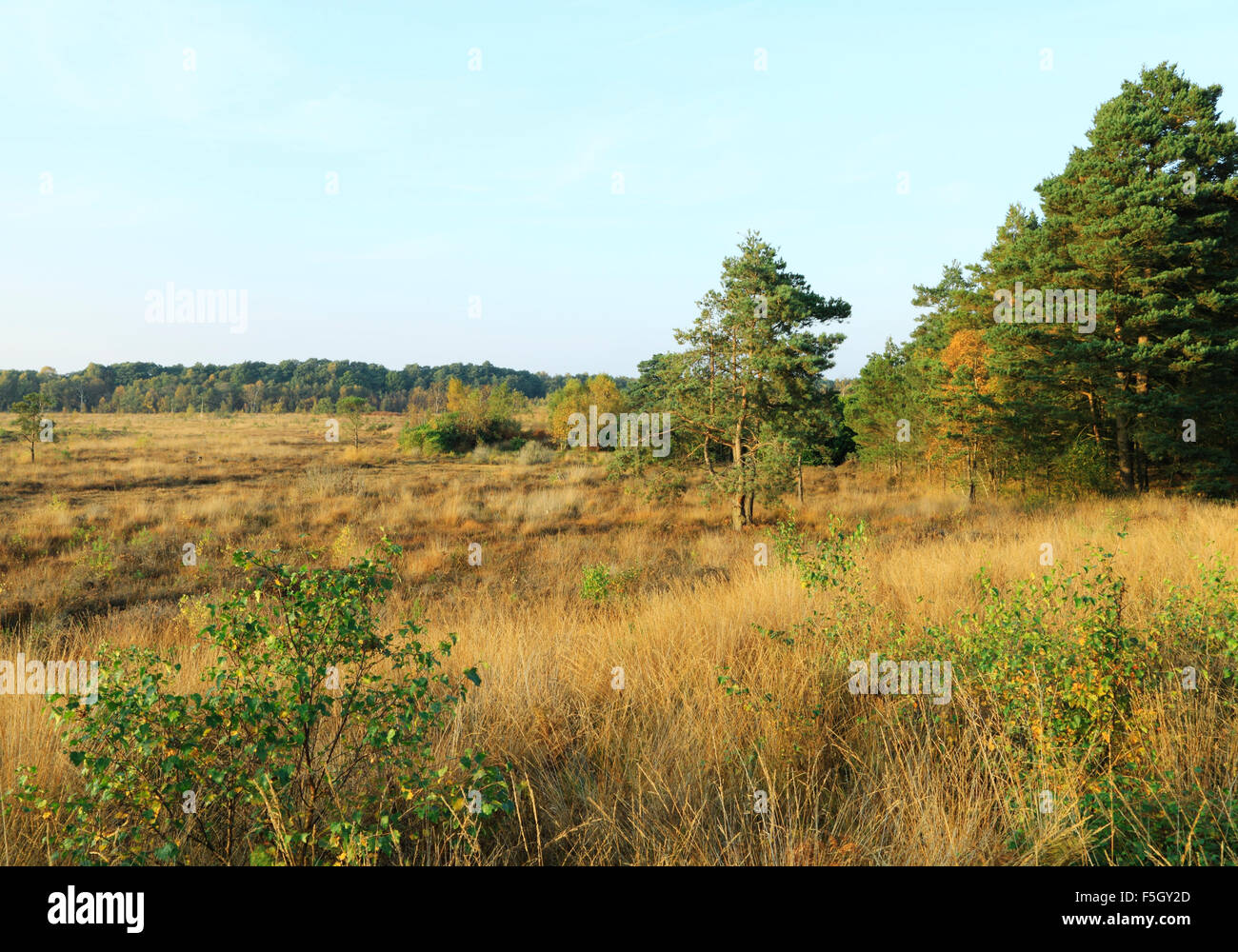 Dersingham Bog National Nature Reserve, designated a Site of Special Scientific Interest, mire, heath and woodland, - Stock Image