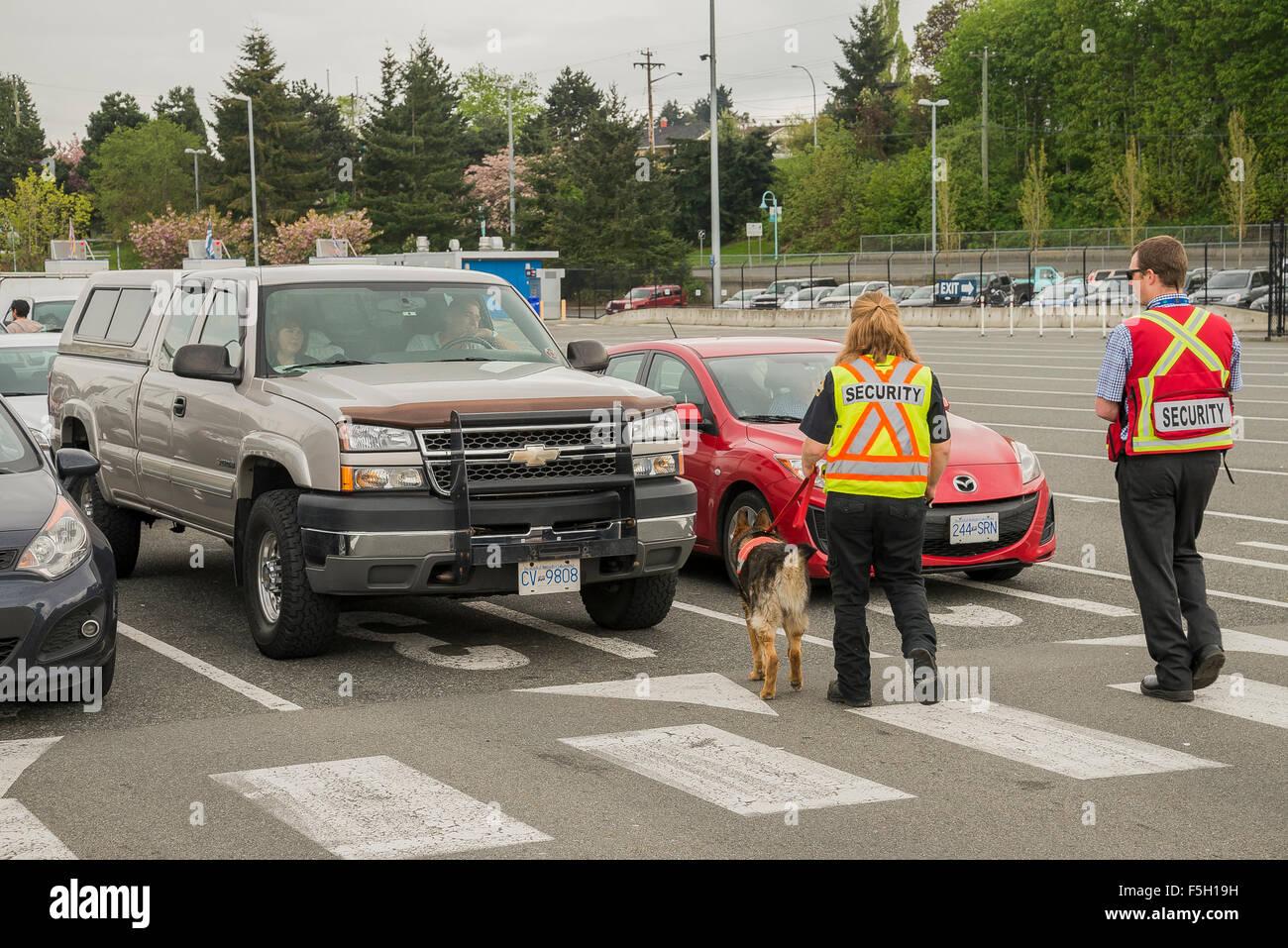 Explosives sniffing dog, Nanaimo Ferry Terminal, Nanaimo, British Columbia, Canada - Stock Image