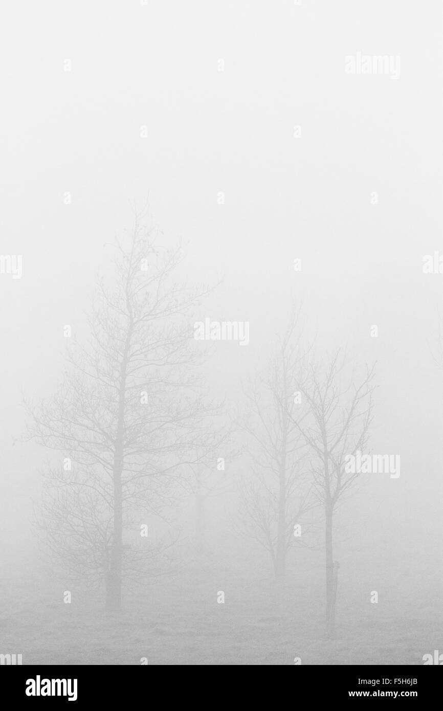 Sparse winter trees in foggy weather - portrait orientation - Stock Image