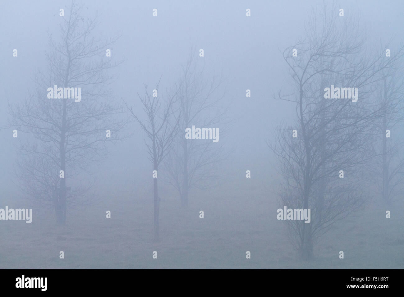 Sparse winter trees in foggy weather - landscape orientation - Stock Image
