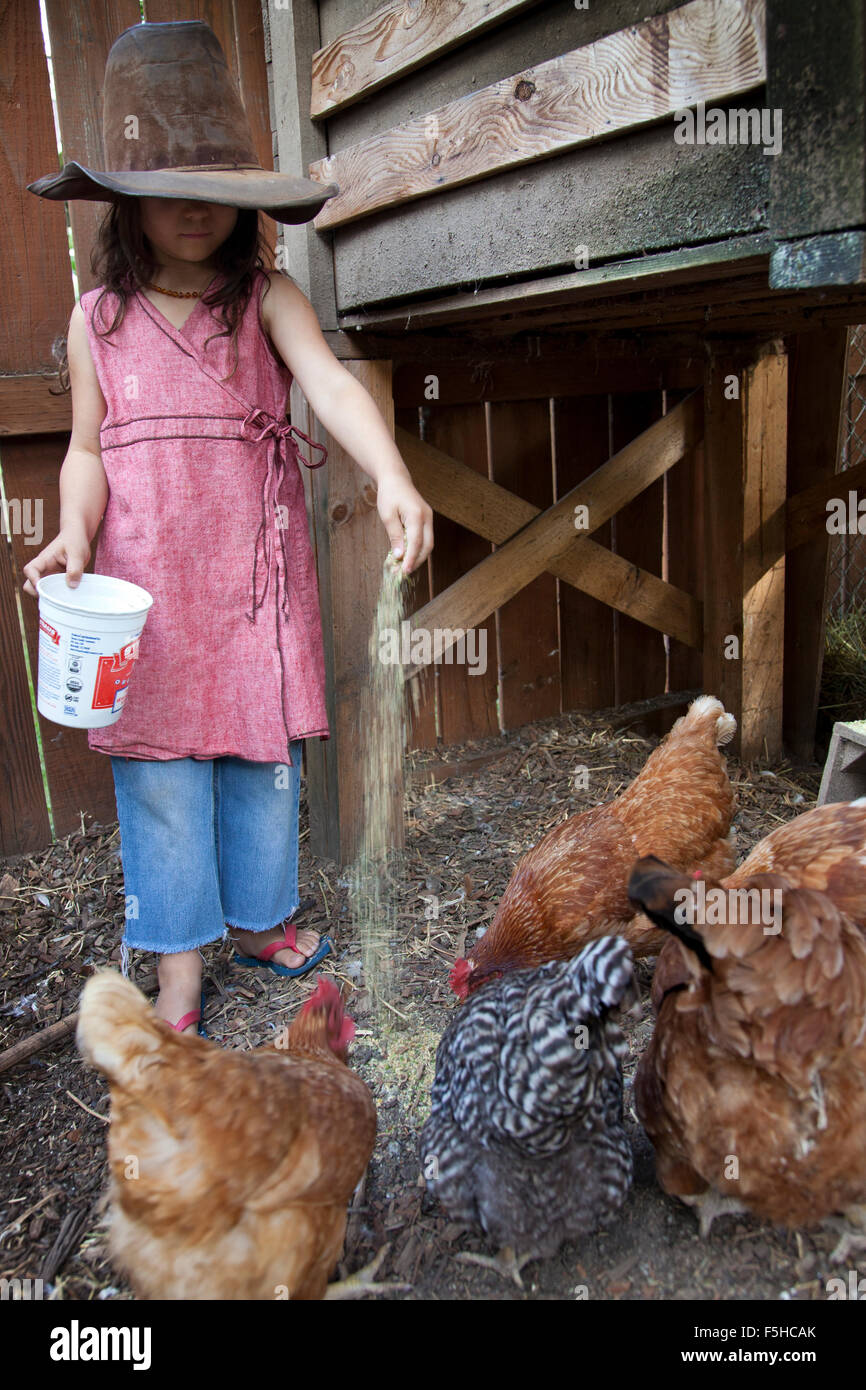 young girl with big old hat covering her eyes feeds chickens out of a plastic container in enclosure - Stock Image