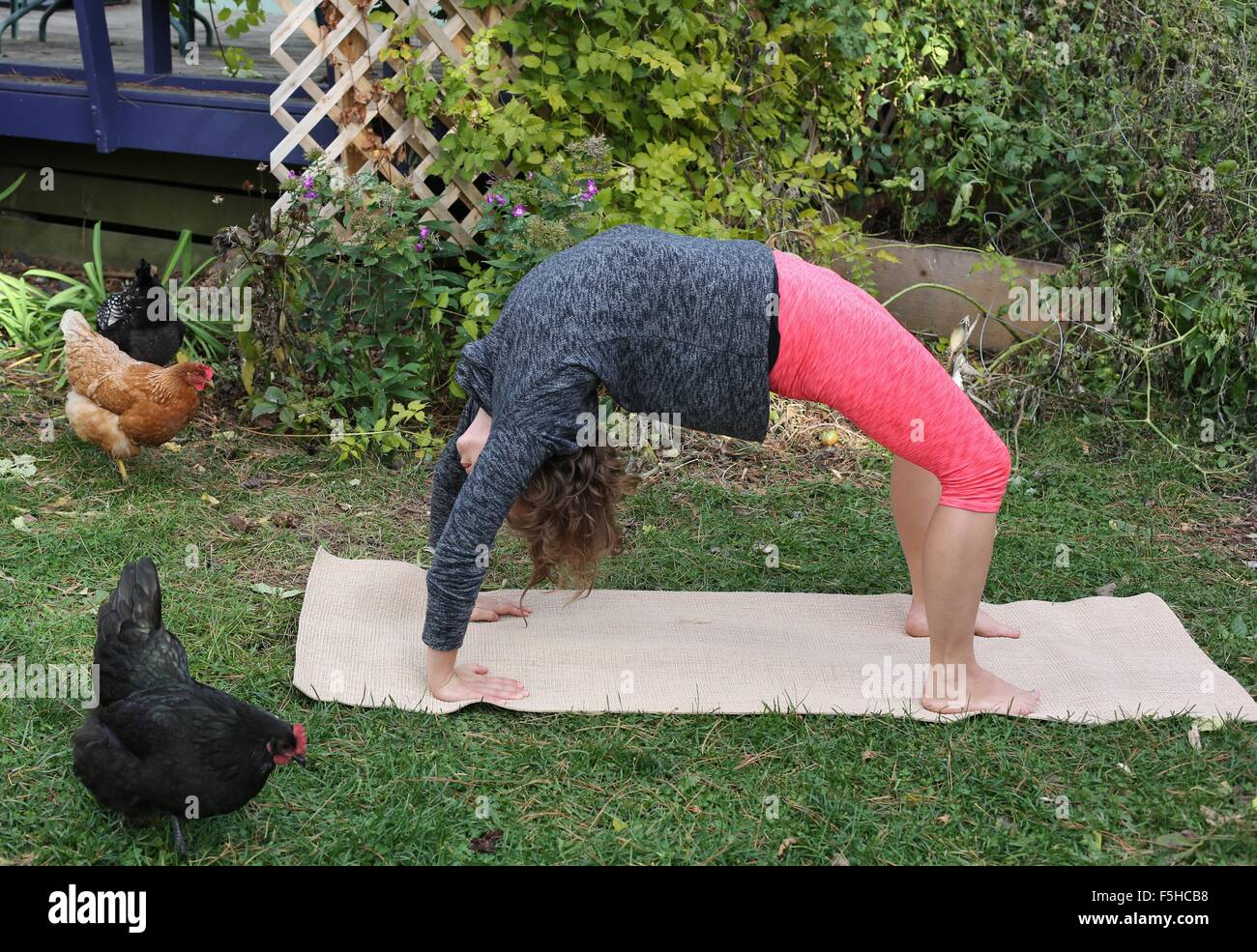 A woman doing yoga outdoors with chickens nearby. Stock Photo