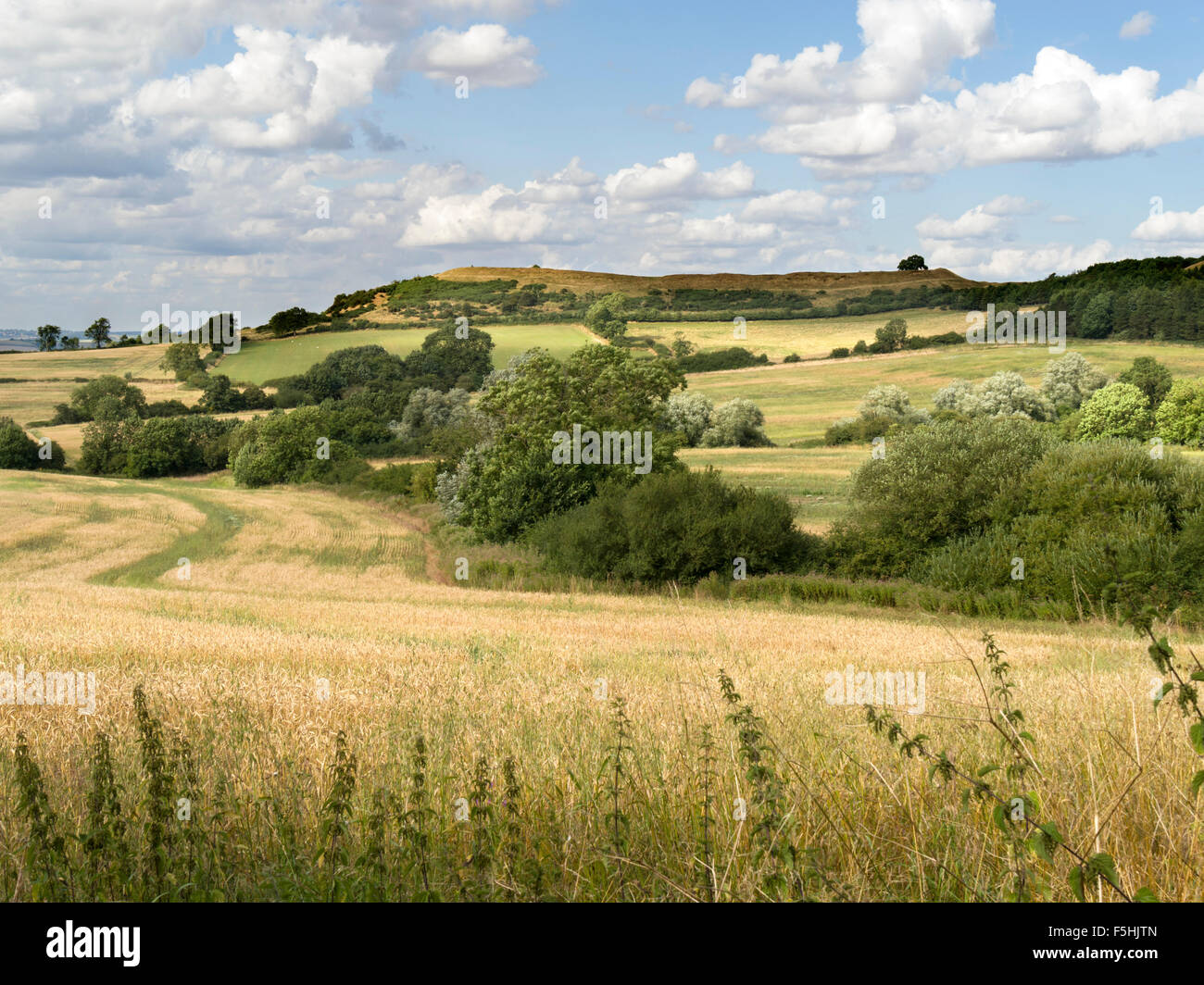 Burrough Hill Iron Age Hill Fort seen across cornfields, Leicestershire, England, UK. - Stock Image
