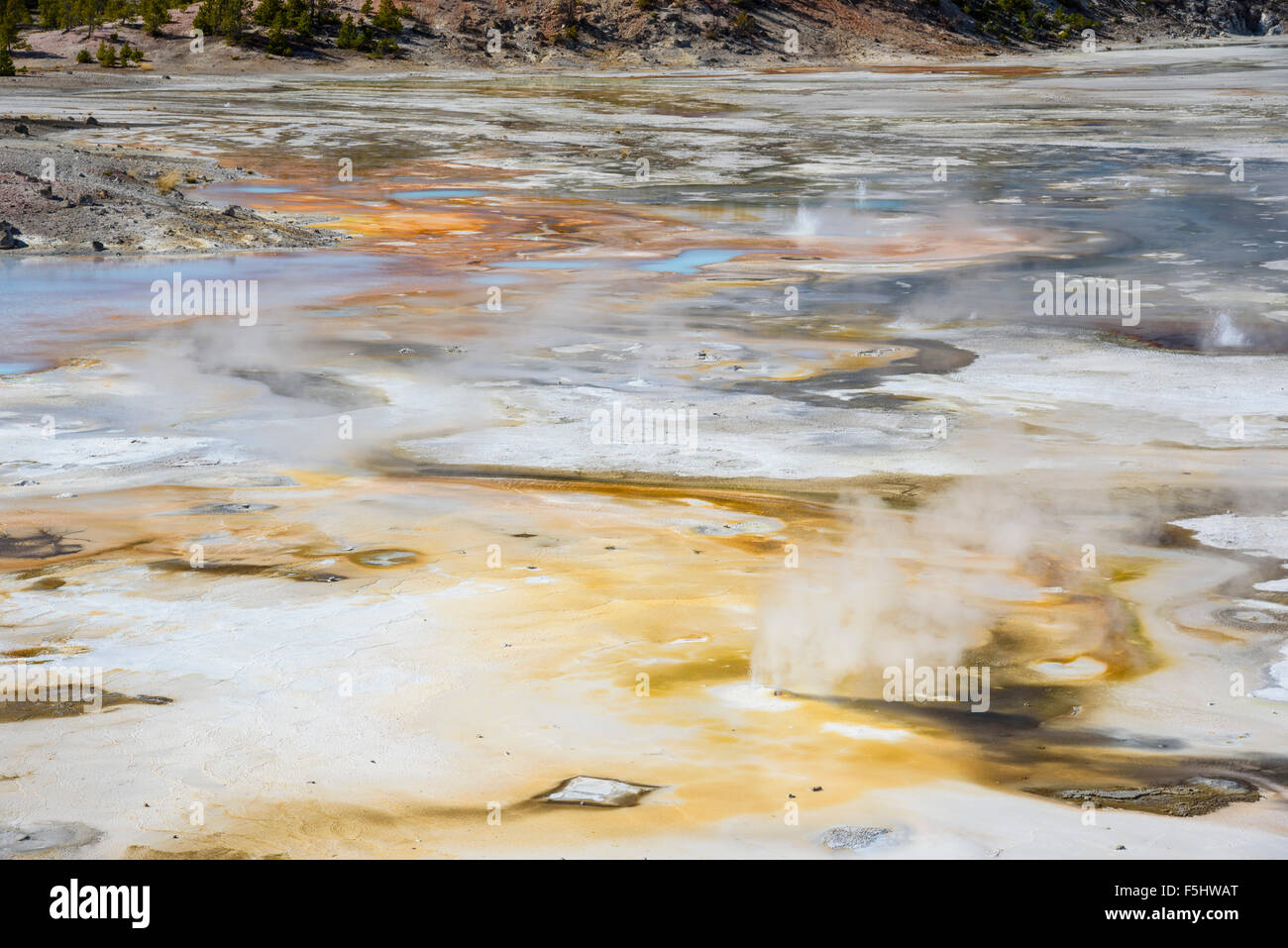 Porcelain Springs, Norris Geyser Basin, Yellowstone National Park, Wyoming, USA - Stock Image