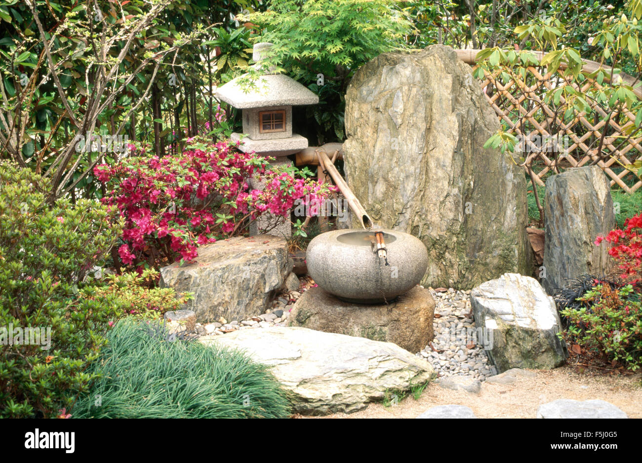 Pink Azalea And Stone Lantern Beside A Japanese Style Water Feature Of Bamboo Pipe Circular Pot