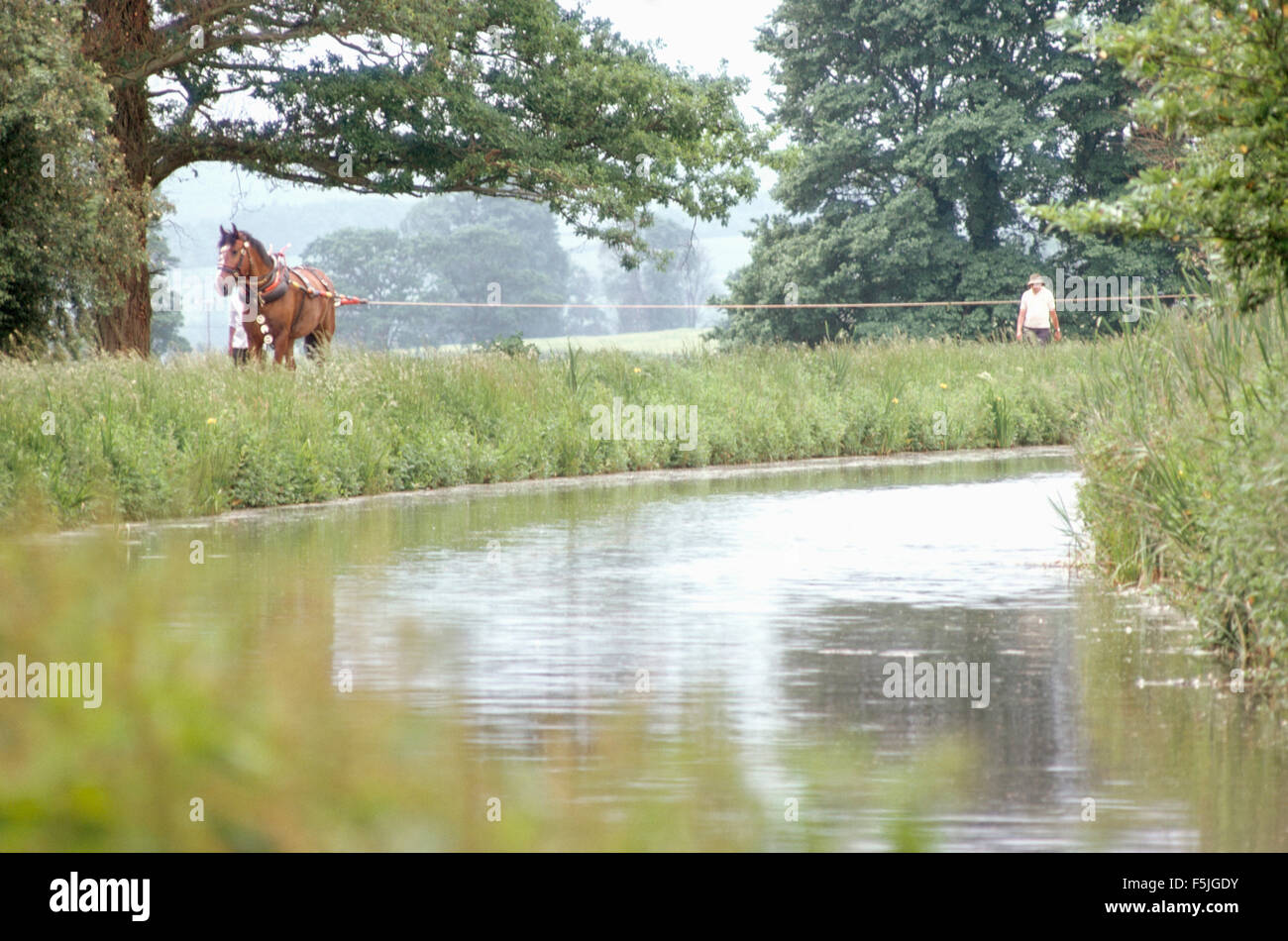 A horse on a canal towpath pulling a narrow boat - Stock Image