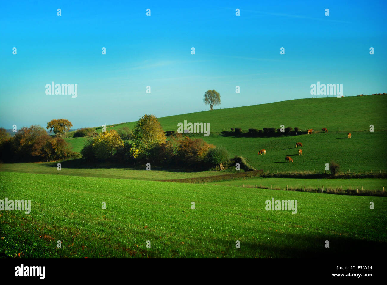 countryside in Zuid Limburg, Netherlands Stock Photo
