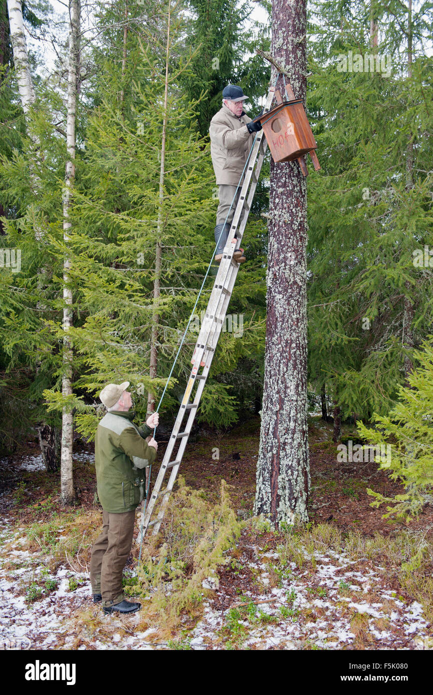 Putting up nesting box for the birds. - Stock Image