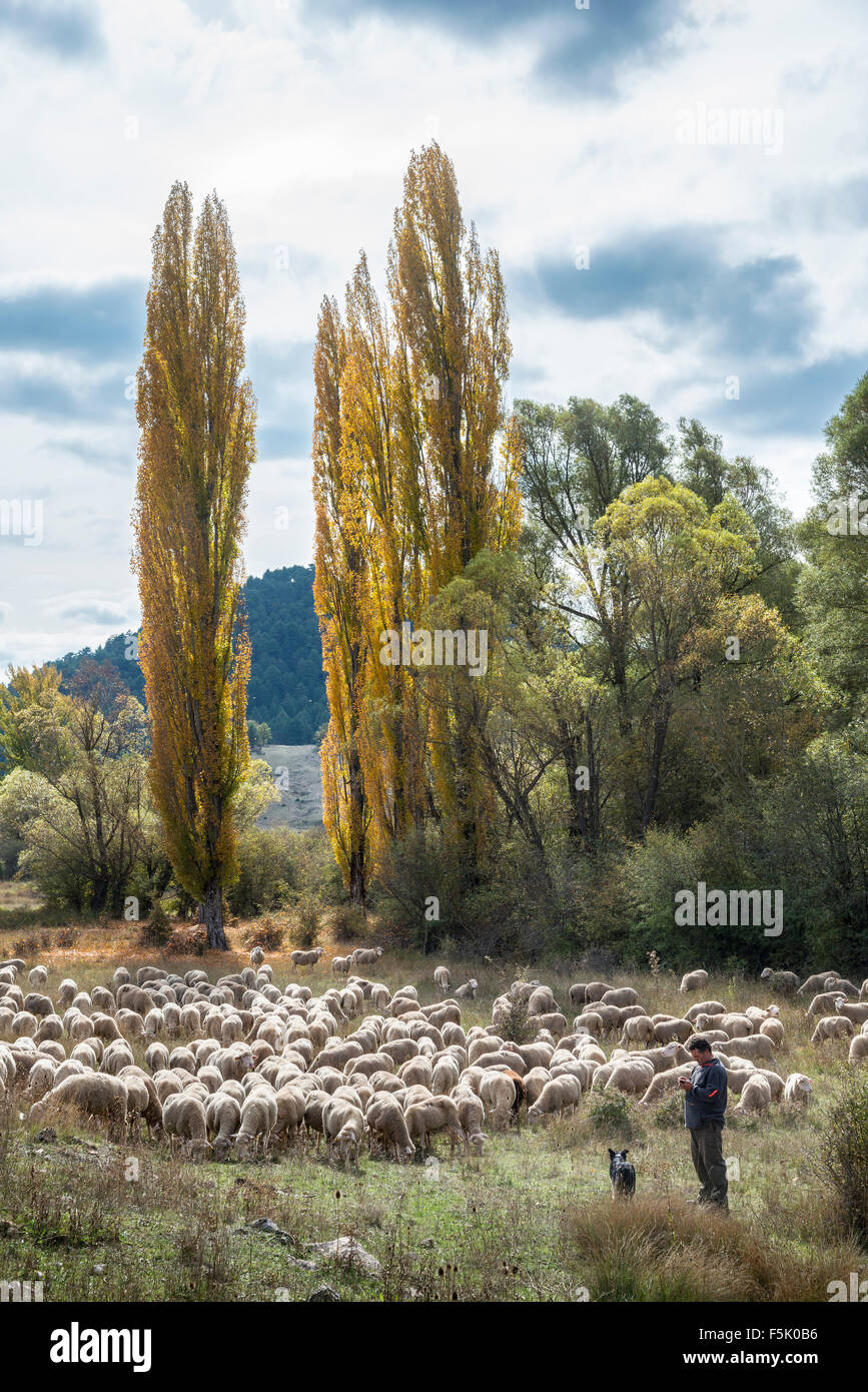 A shepherd with his flock near Tragacete in the Serrania de Cuenca, Castilla-la mancha, Central Spain - Stock Image