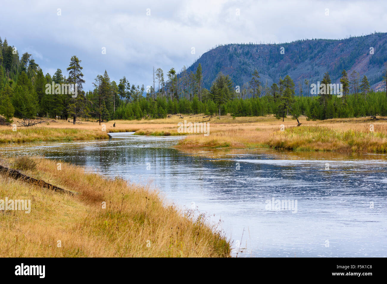 Madison River, Yellowstone National Park, Wyoming, USA - Stock Image