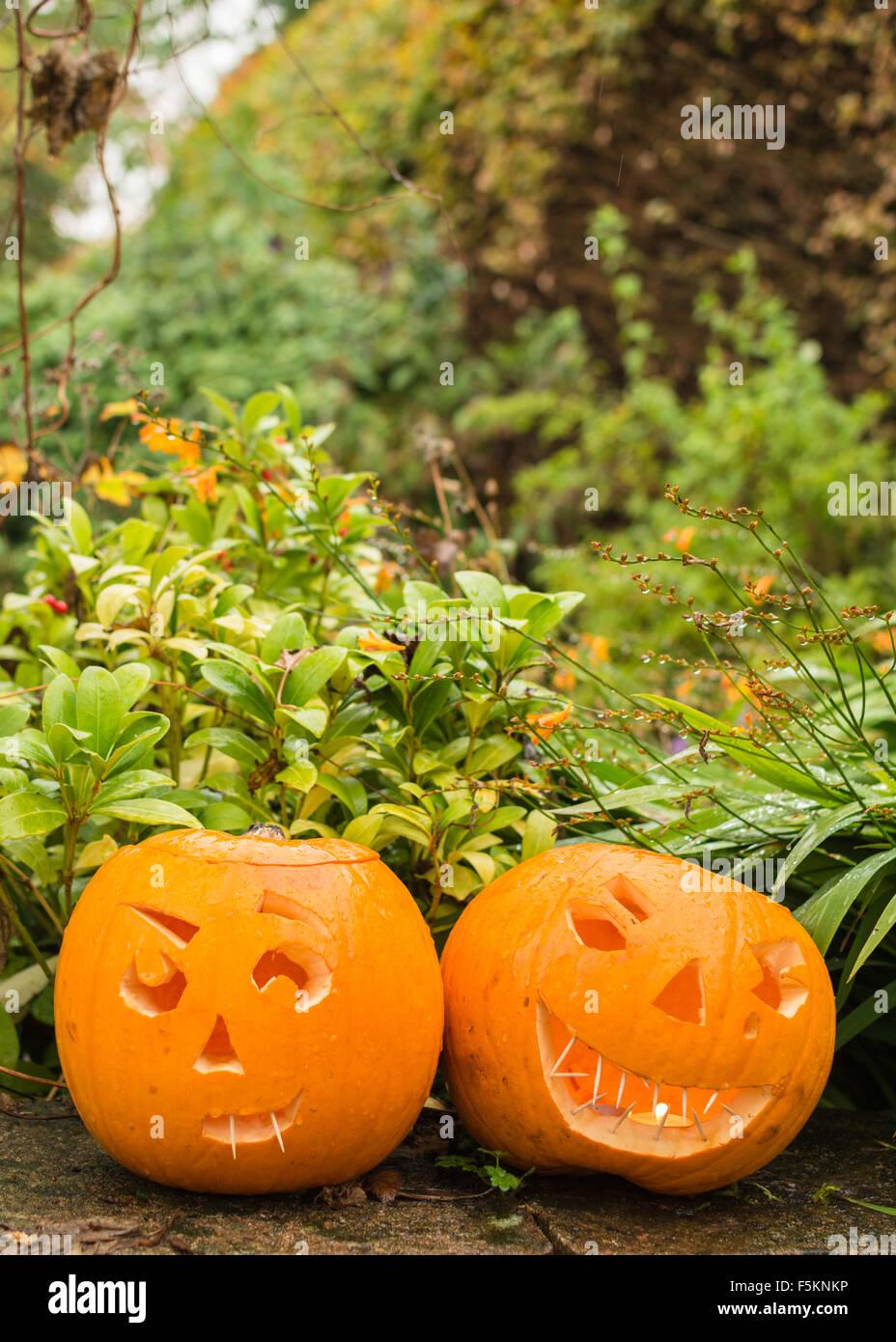 two carved halloween pumpkins in autumn garden - uk - Stock Image