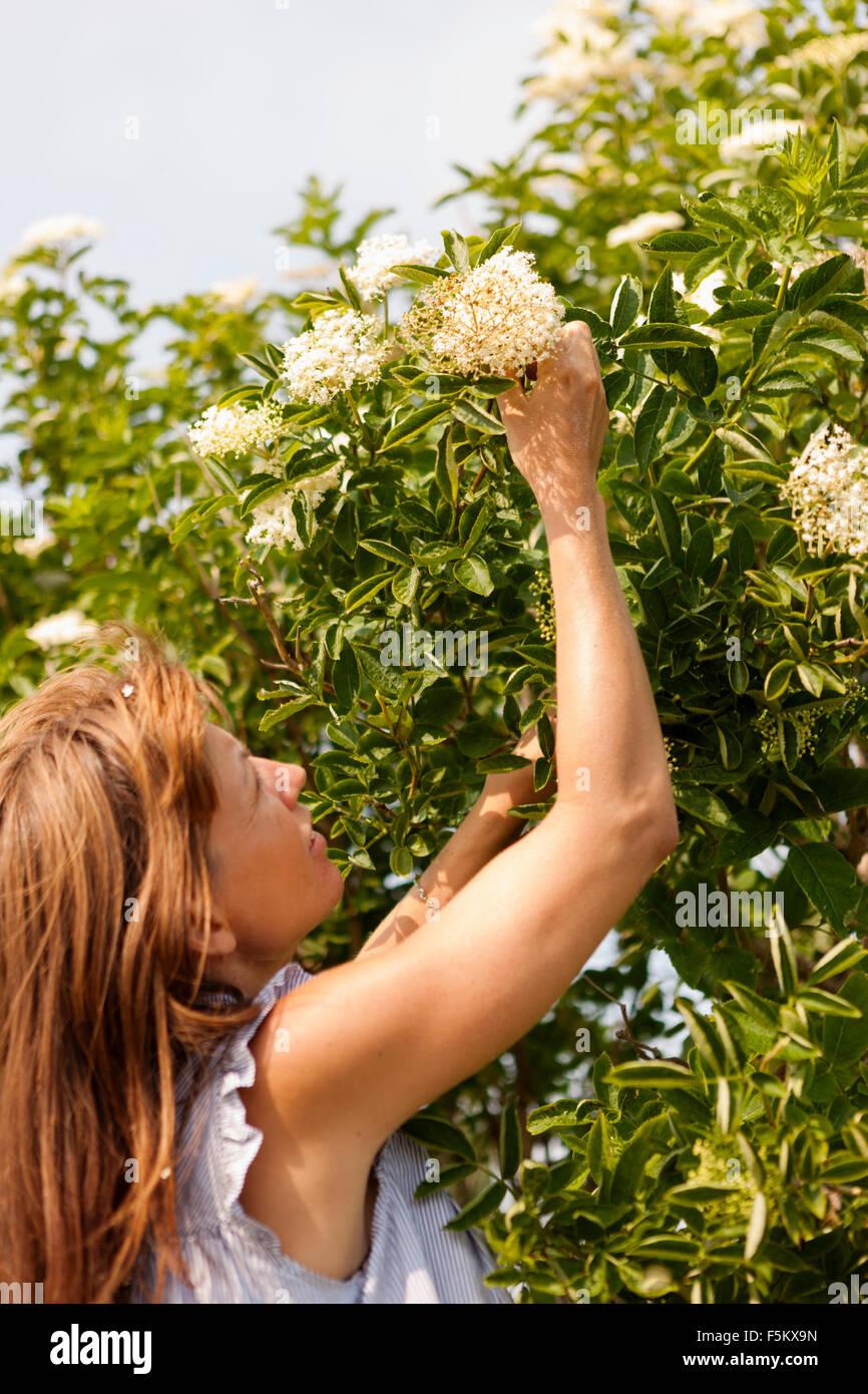 Sweden, Oland, Gronhogen, Mid-adult woman picking up flower - Stock Image