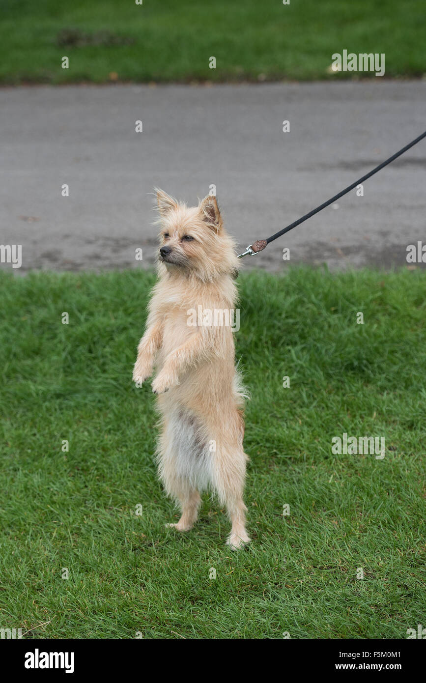 PupAid Puppy Farm Awareness Day 2015 held on Primrose Hill.  Featuring: Atmosphere Where: London, United Kingdom - Stock Image
