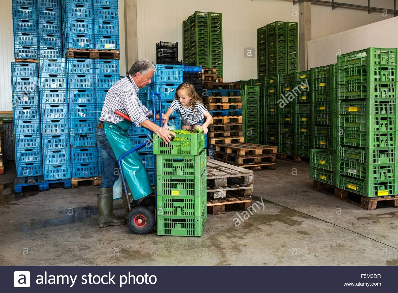 Grandfather and granddaughter stacking crates - Stock Image