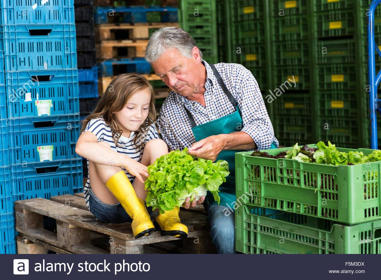 Grandfather and granddaughter checking quality of lettuce - Stock Image