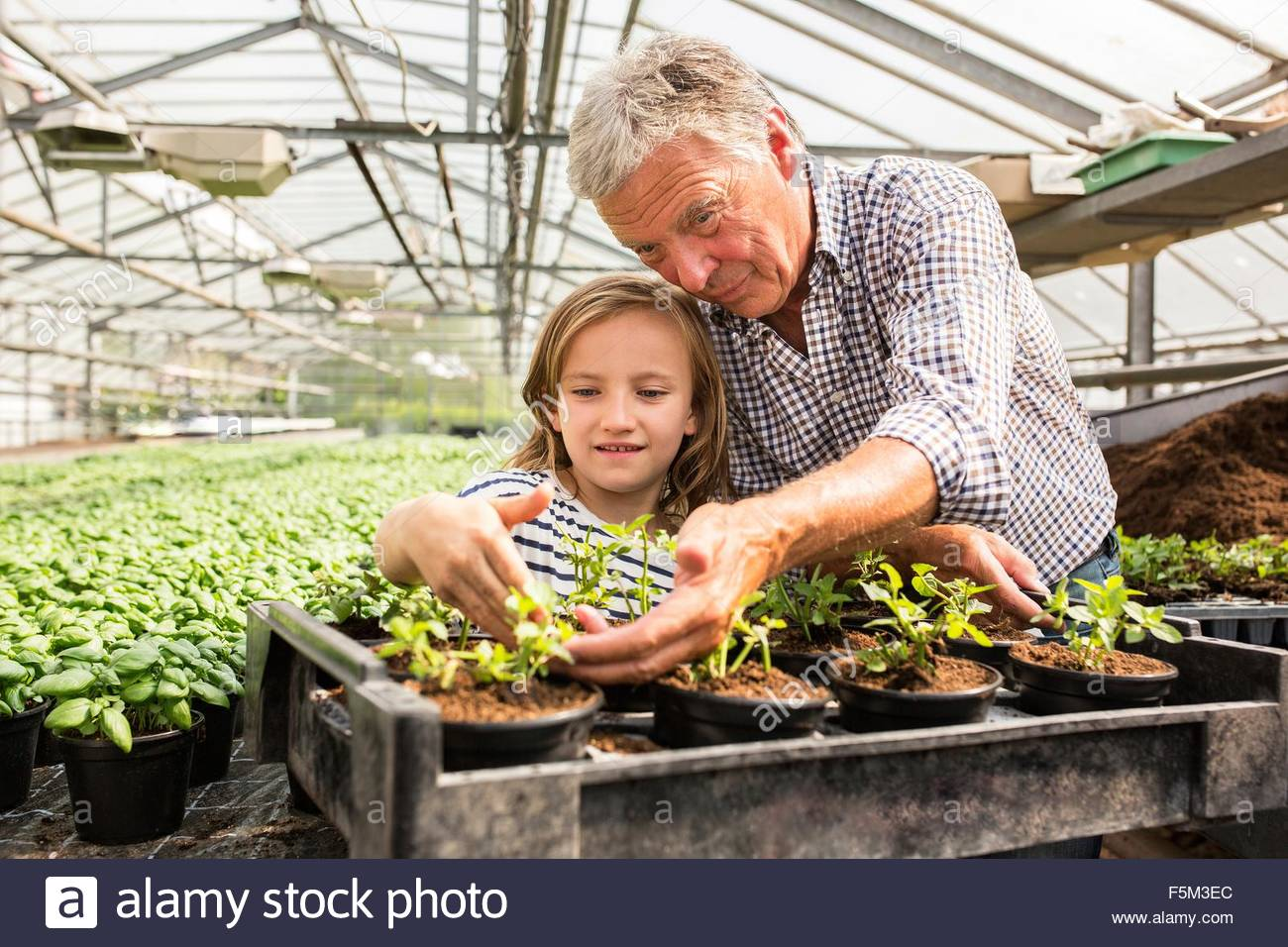 Grandfather arm around granddaughter looking at potted seedlings in hothouse - Stock Image