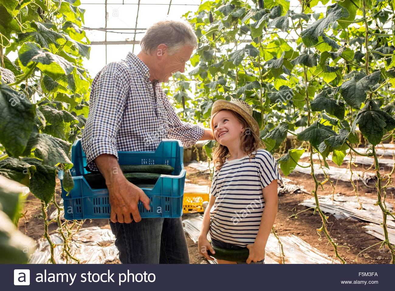 Grandfather and granddaughter in hothouse holding cucumbers trying on hat - Stock Image