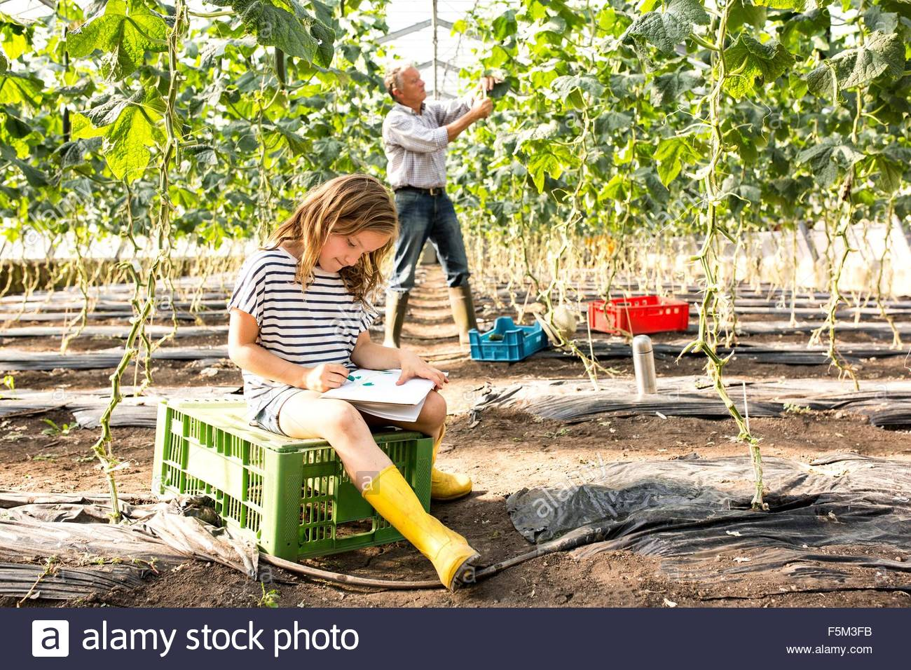 Girl sitting on crate in hothouse drawing while grandfather works behind - Stock Image