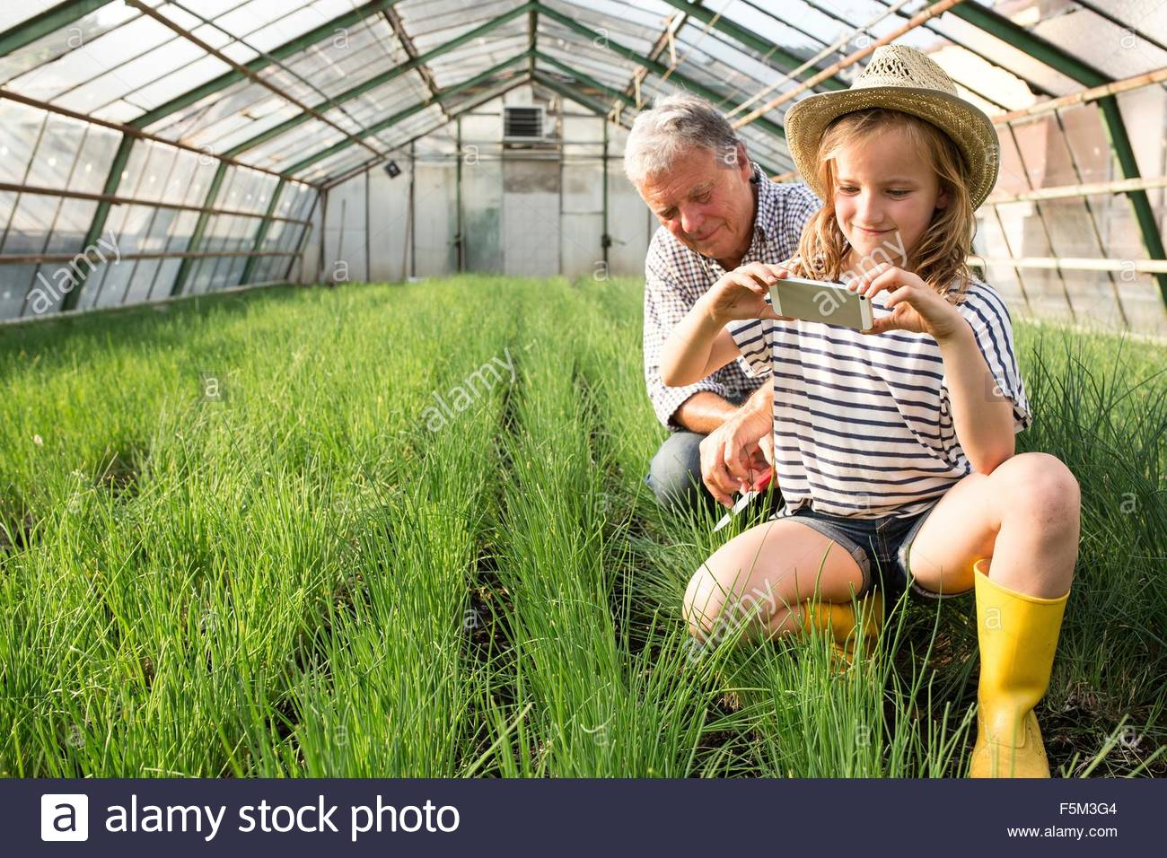 Granddaughter and grandfather in hothouse using smartphone to photograph chives - Stock Image