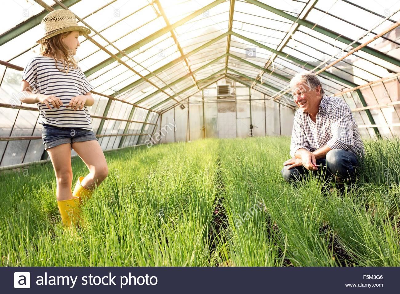 Grandfather and granddaughter in hothouse full of chive plants - Stock Image