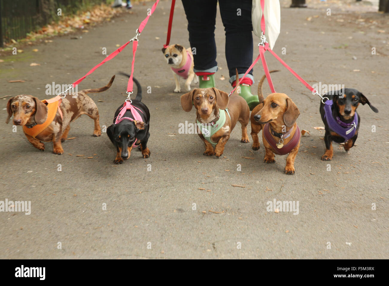 PupAid Puppy Farm Awareness Day 2015 held on Primrose Hill  Featuring: Guest Where: London, United Kingdom When: - Stock Image