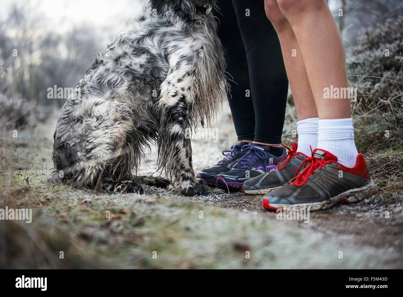 Legs of mother and son wearing trainers and sitting dog - Stock Image