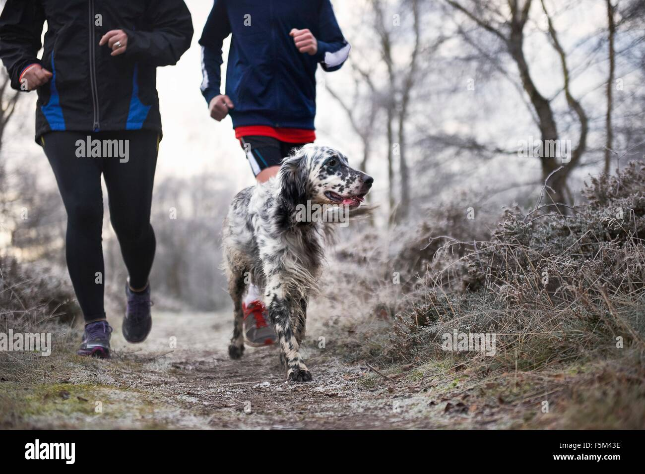 Neck down of mother and son running with dog - Stock Image