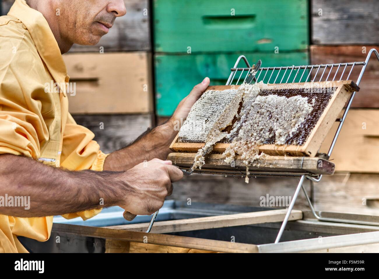 Honeykeeper uncapping hive frame - Stock Image