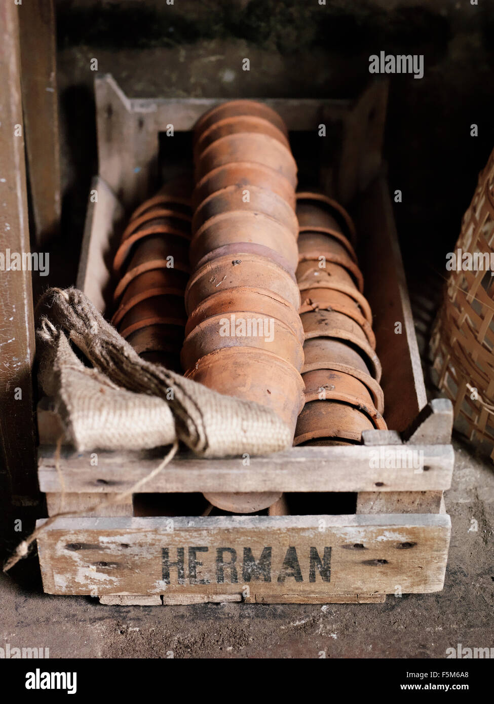Flower pots in crate - Stock Image