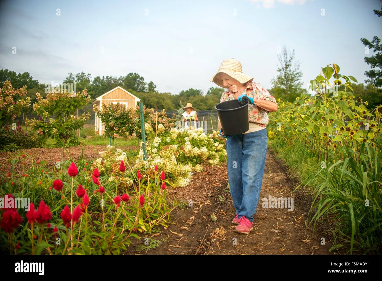 Senior woman watering flowers with bucket on farm - Stock Image