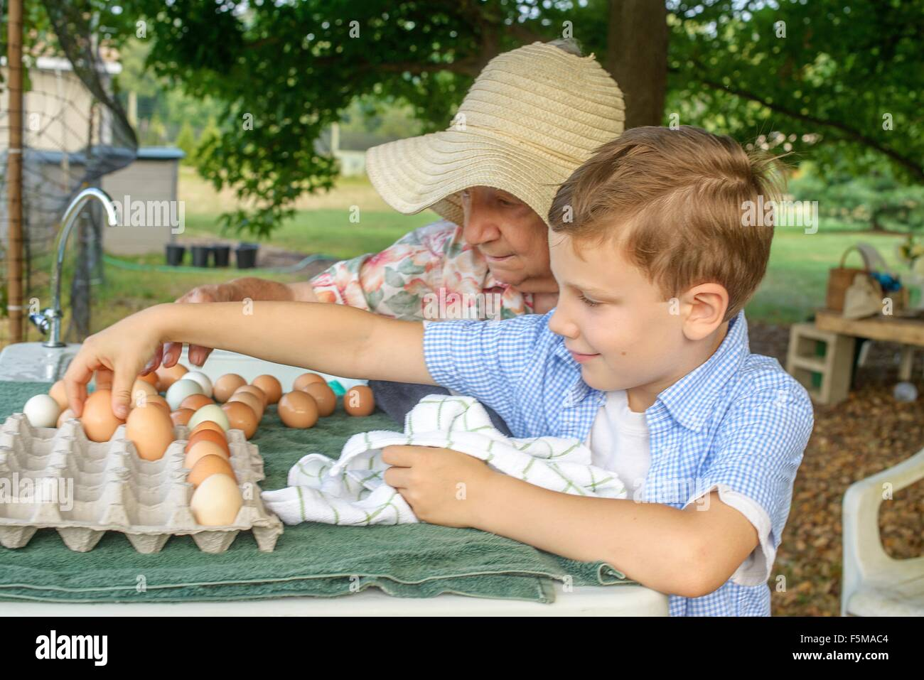 Senior woman and grandson arranging eggs into tray on farm - Stock Image