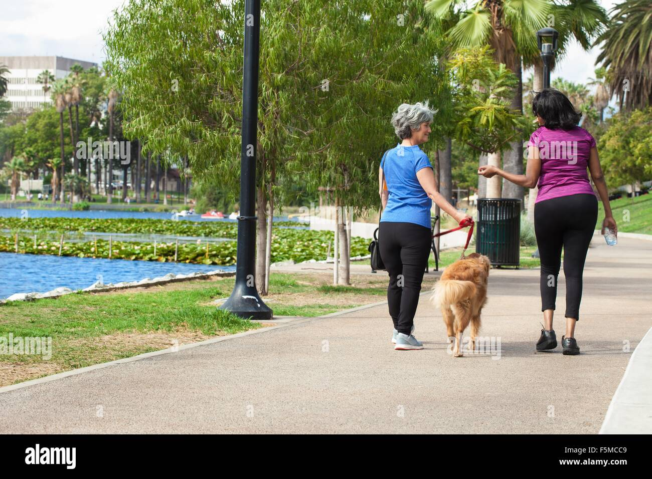 Mature female friends, walking dog in park, rear view - Stock Image
