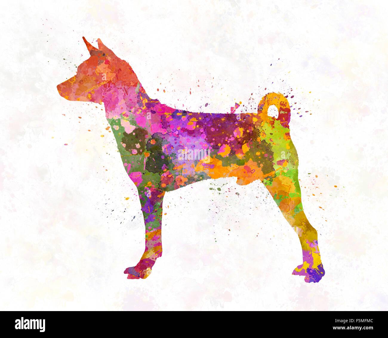 Basenji in watercolor - Stock Image