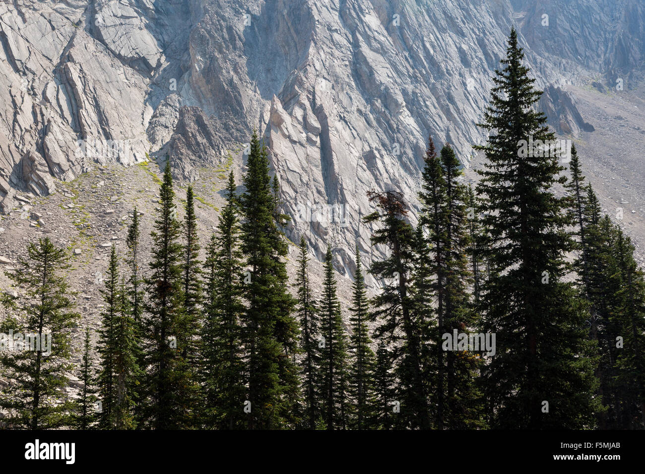 Evergreen trees standing in front of rocky cliffs in the Gros Ventre Mountains, Gros Ventre Wilderness, Wyoming - Stock Image
