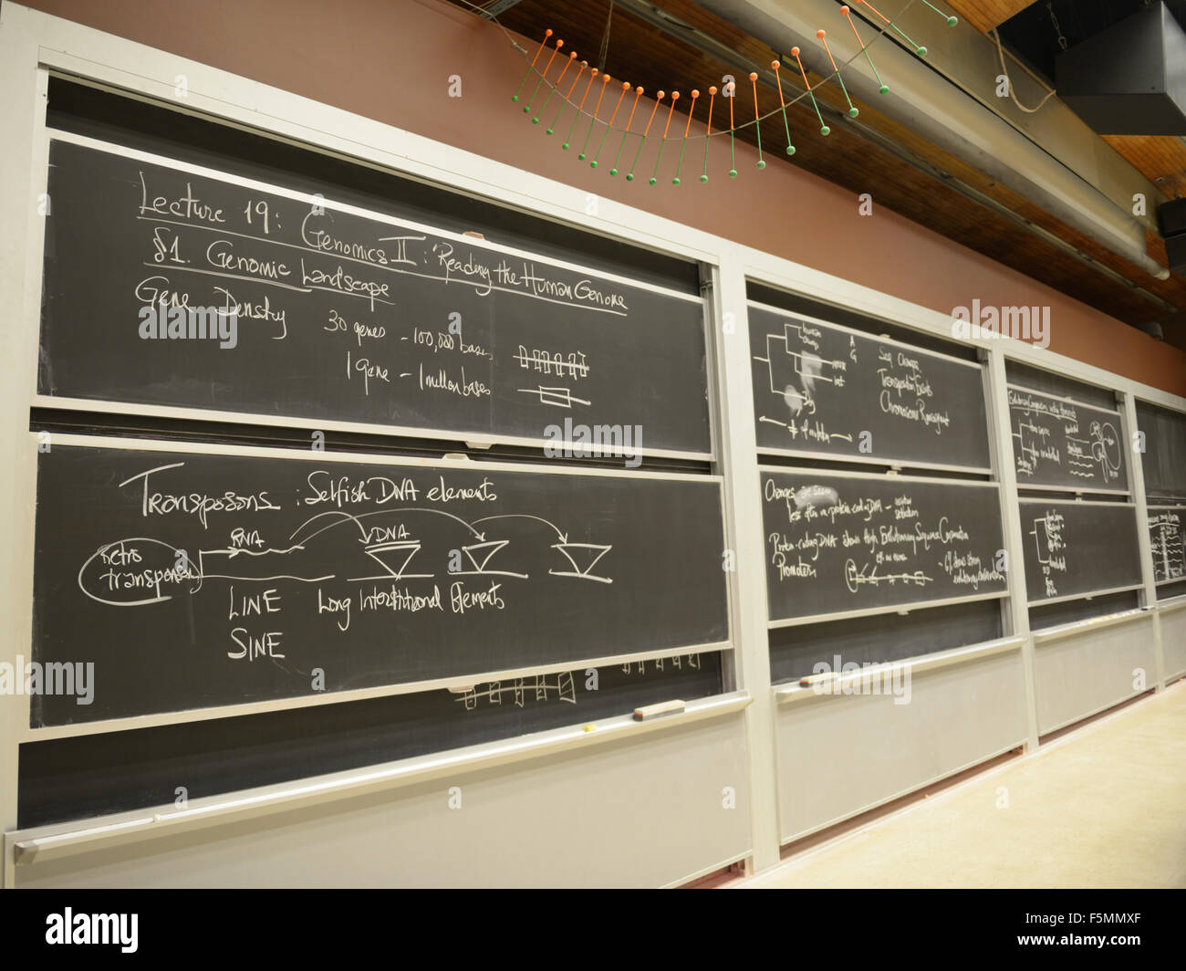 University lecture hall blackboard with notes written by Biology professor - Stock Image