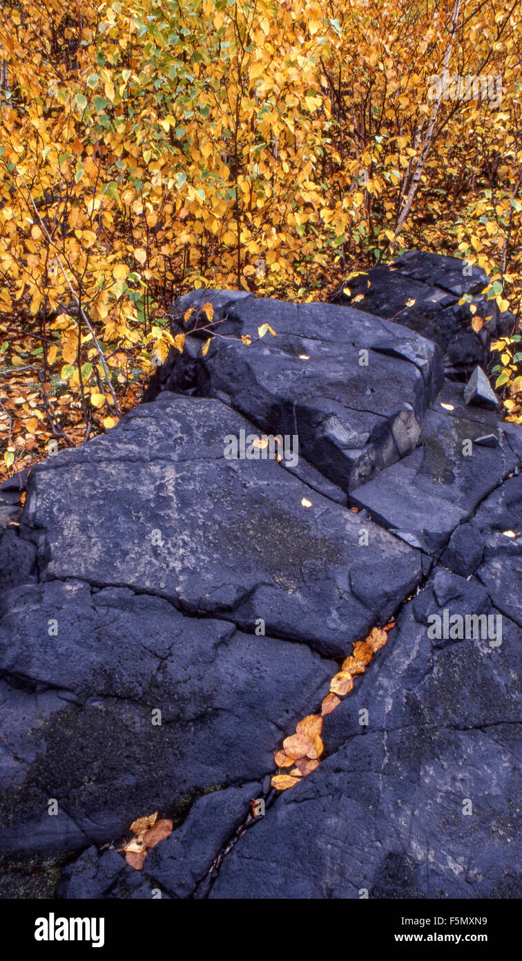 Fallen birch leaves on rock, Sudbury, Ontario, Canada. - Stock Image