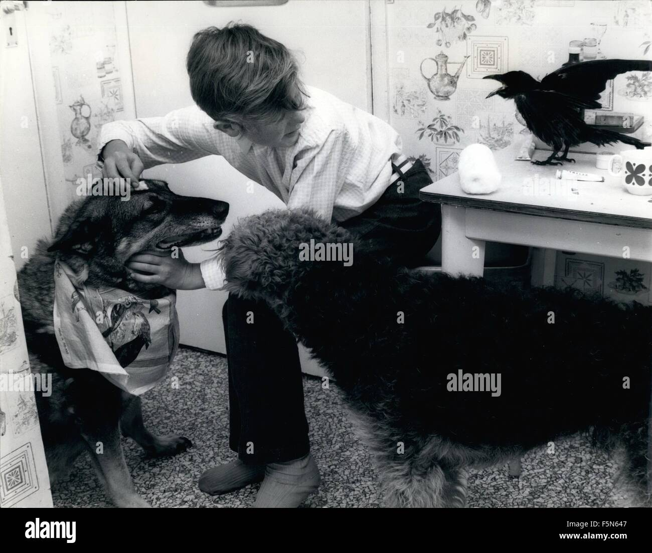 1968 - Peter the animal nurse - with three of his pats - Judy the blind alsatian, Shane the airedale - and Bilko - Stock Image