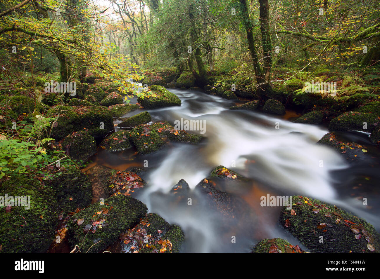 Autumn river Bovey Dartmoor national park Devon Uk - Stock Image
