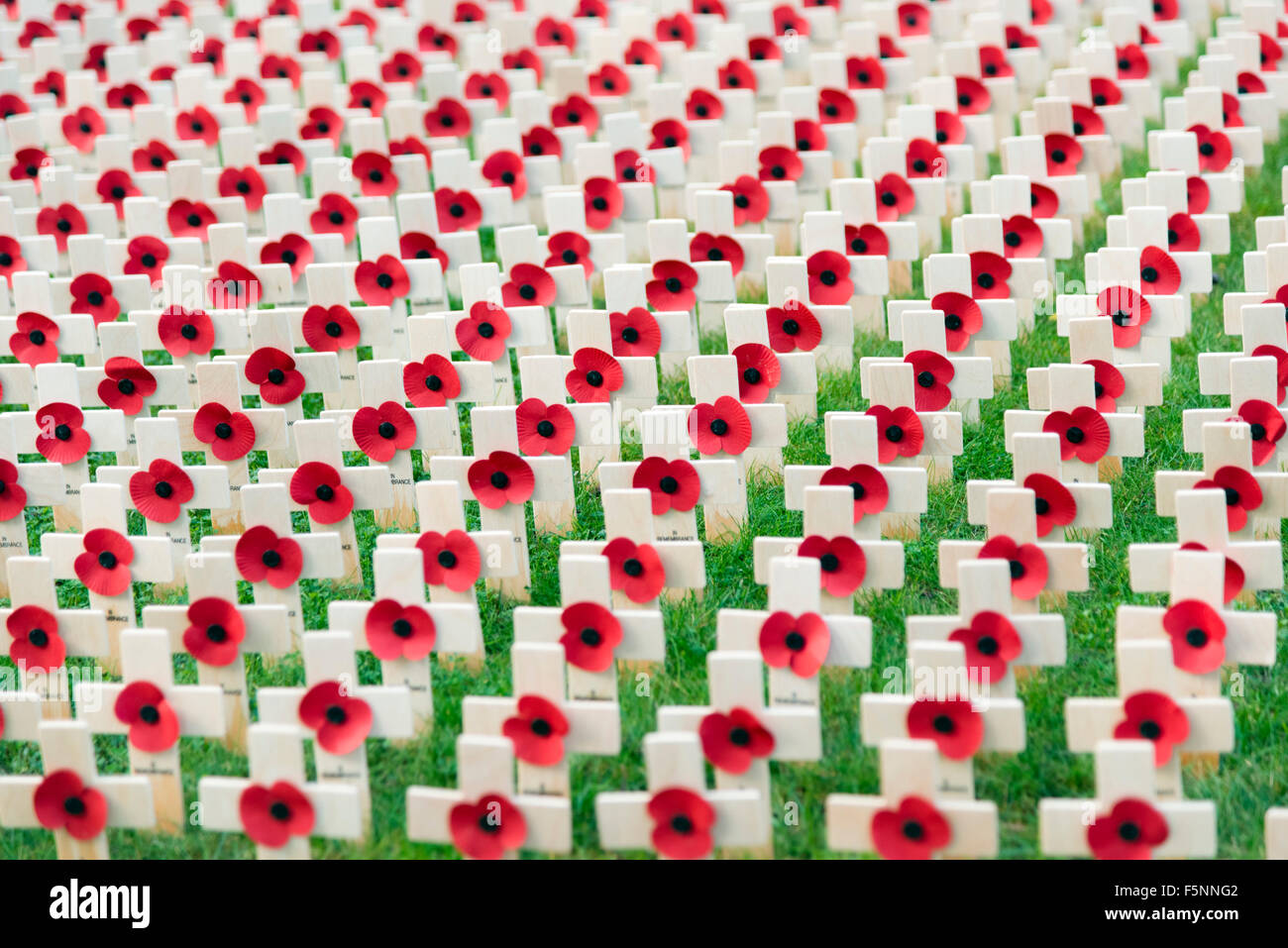 Hereford, UK. 07th Nov, 2015. Red poppies in a Field of Remembrance outside Hereford Cathedral Credit:  Robert Convery/Alamy - Stock Image