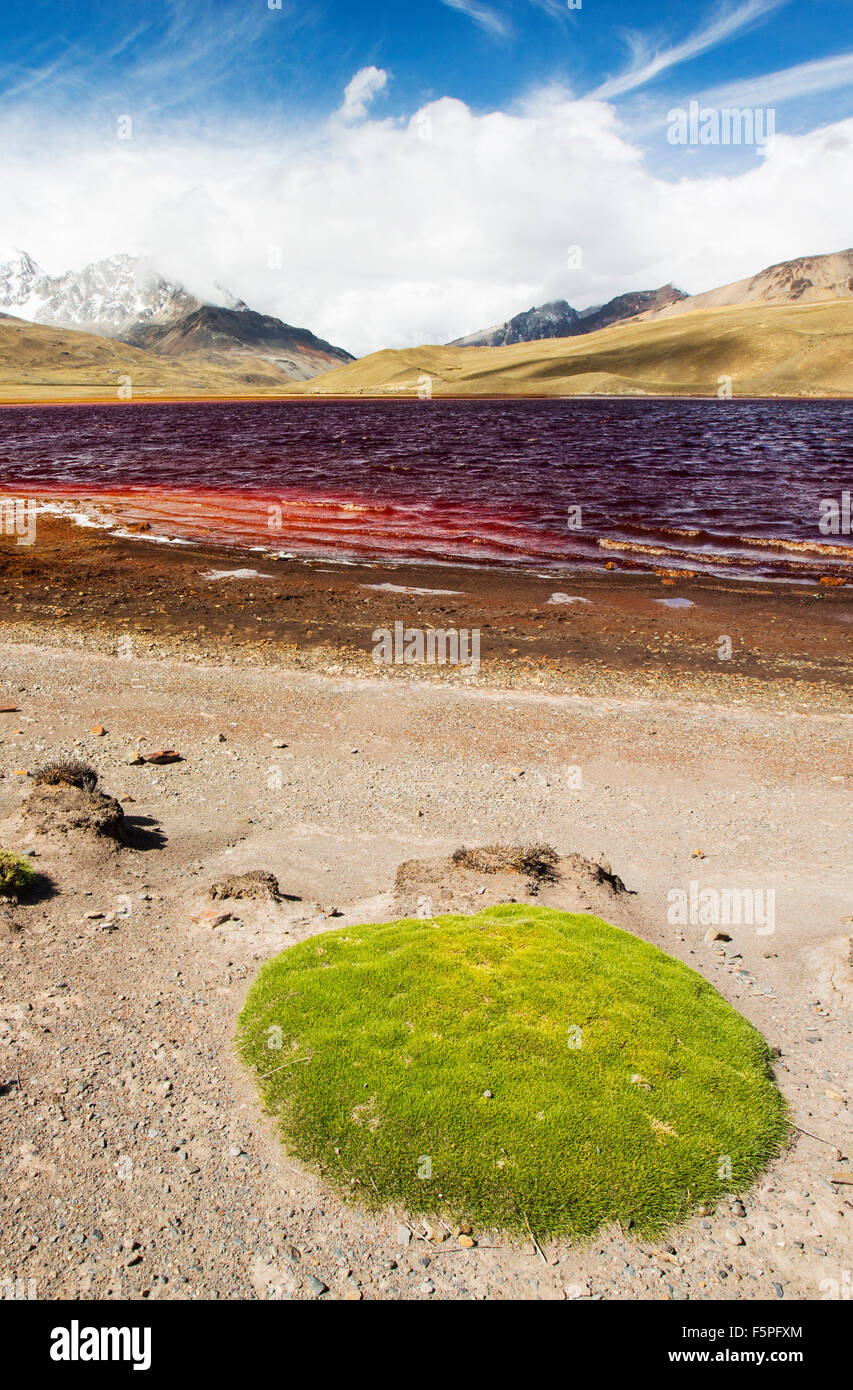 Laguna Miluni is a reservoir fed by glacial meltwater from the Andean peak of Huayna Potosi in the Bolivian Andes. Stock Photo
