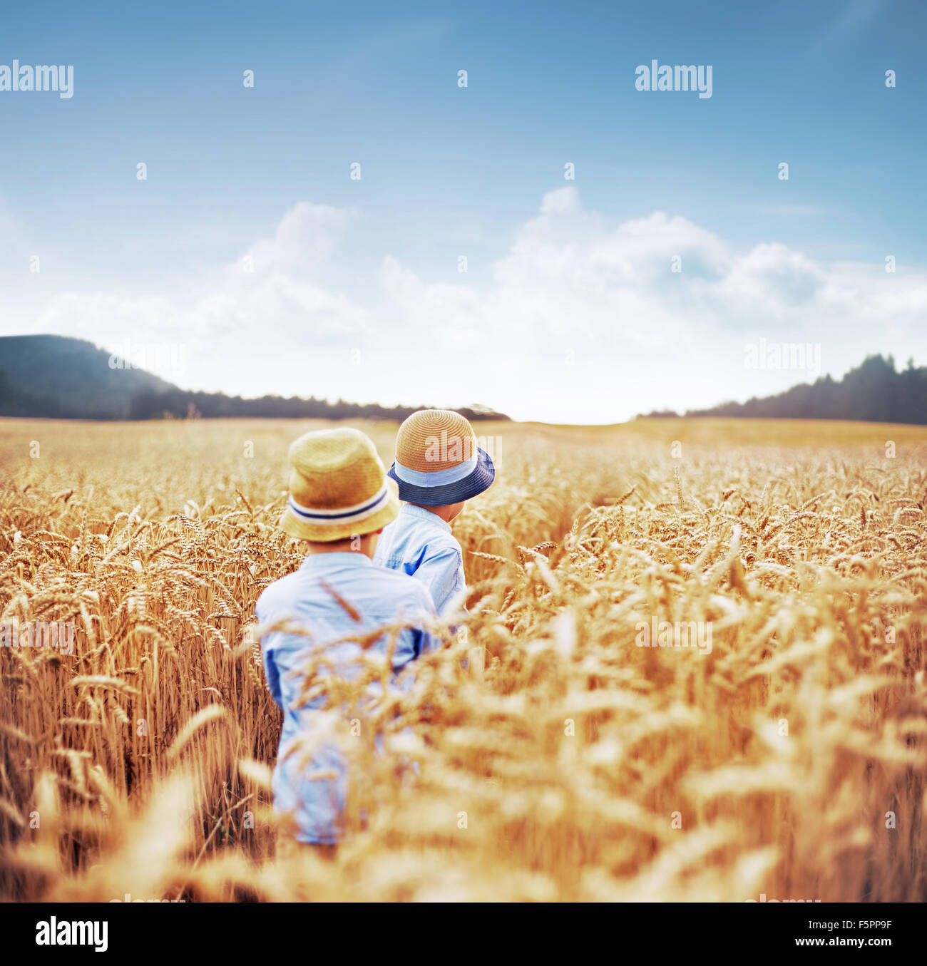 Two brothers among cereal fields - Stock Image