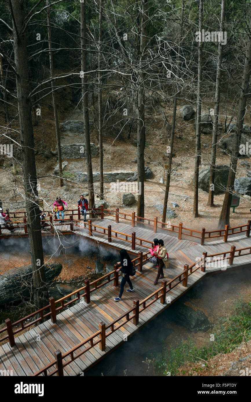 beijing botanical gardens redwoods metasequoia exhibit wooden walkway pathway protection conservation RM Floral - Stock Image