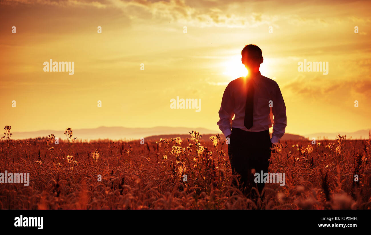Tired young businessman walking among the corn ears - Stock Image