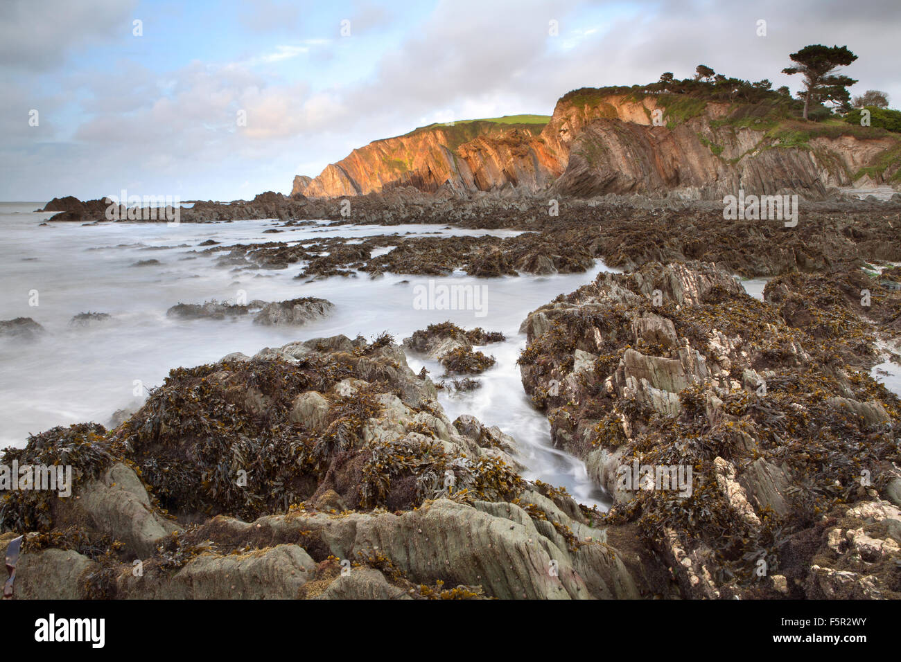 Seaweed on the rocks at Lee Devon, at low tide at sunset. Stock Photo