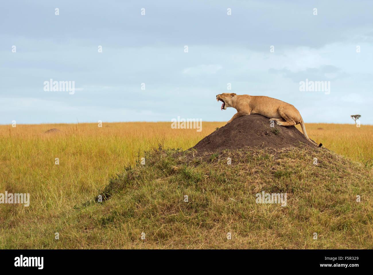 Lying Under the Mound
