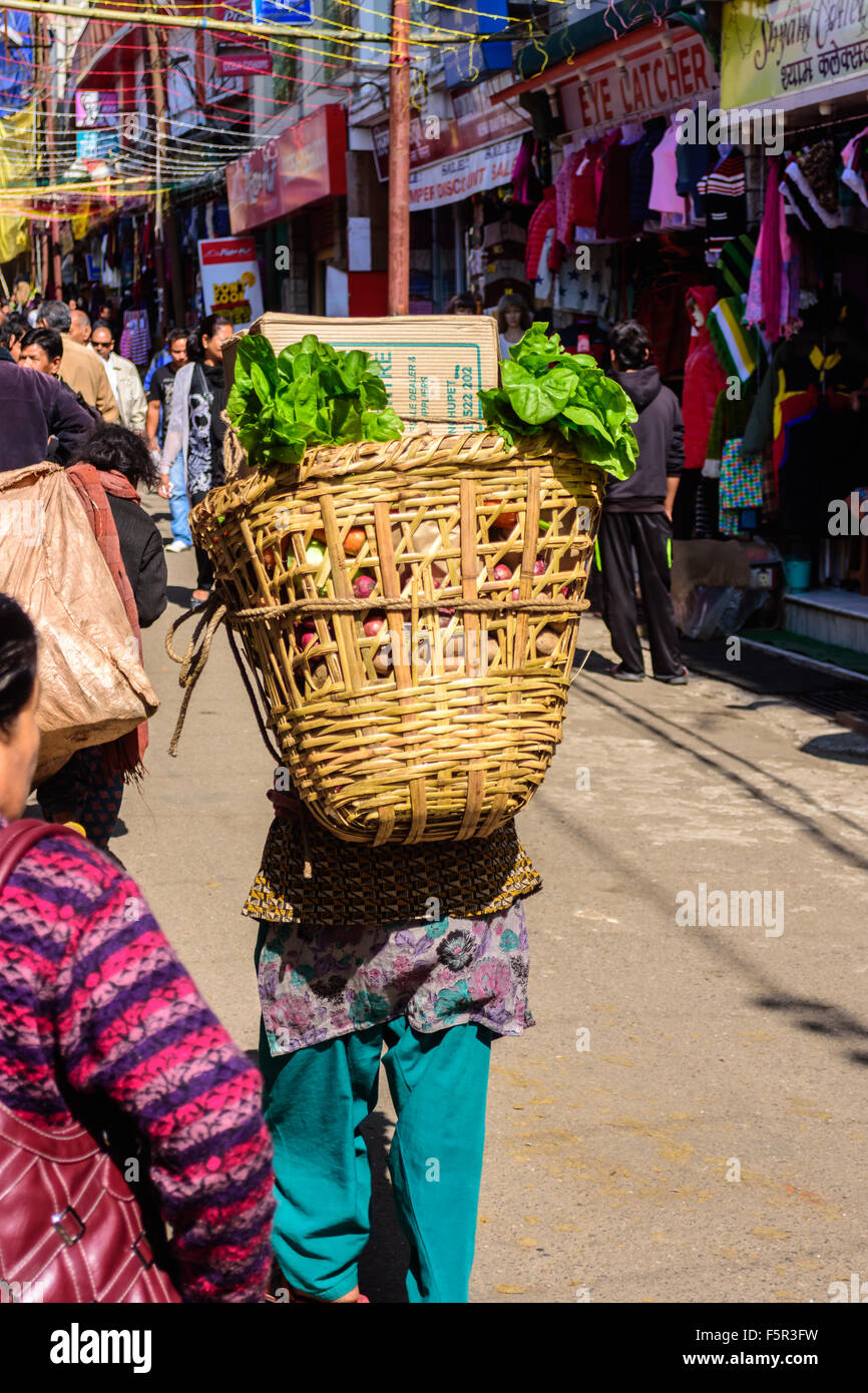 Porter, labor carrying foods, groceries and other supplies on her back on hill roads of Darjeeling, West Bengal, - Stock Image