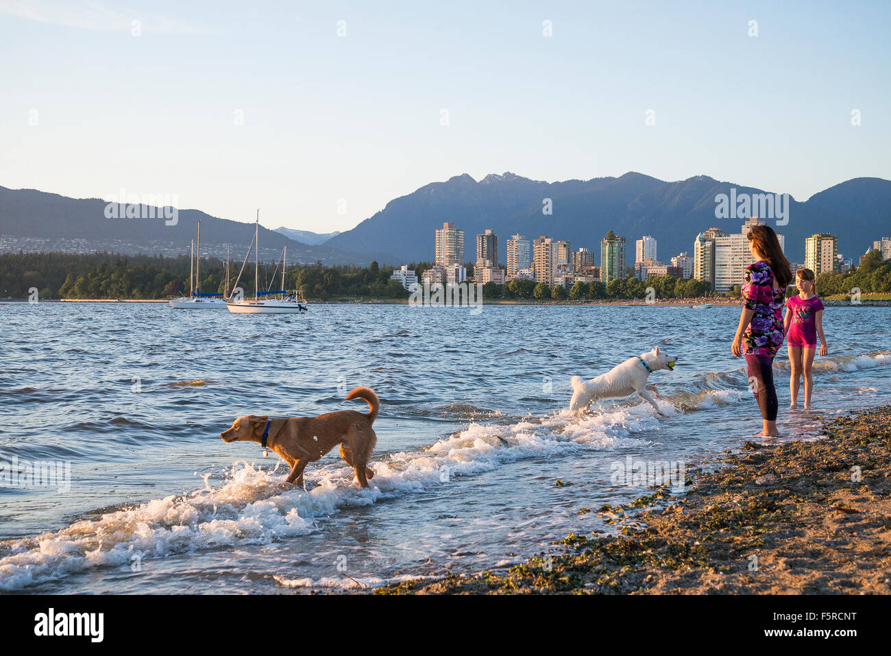 Hadden Park beach a legal dog off-leash area, Vancouver, British Columbia, Canada - Stock Image