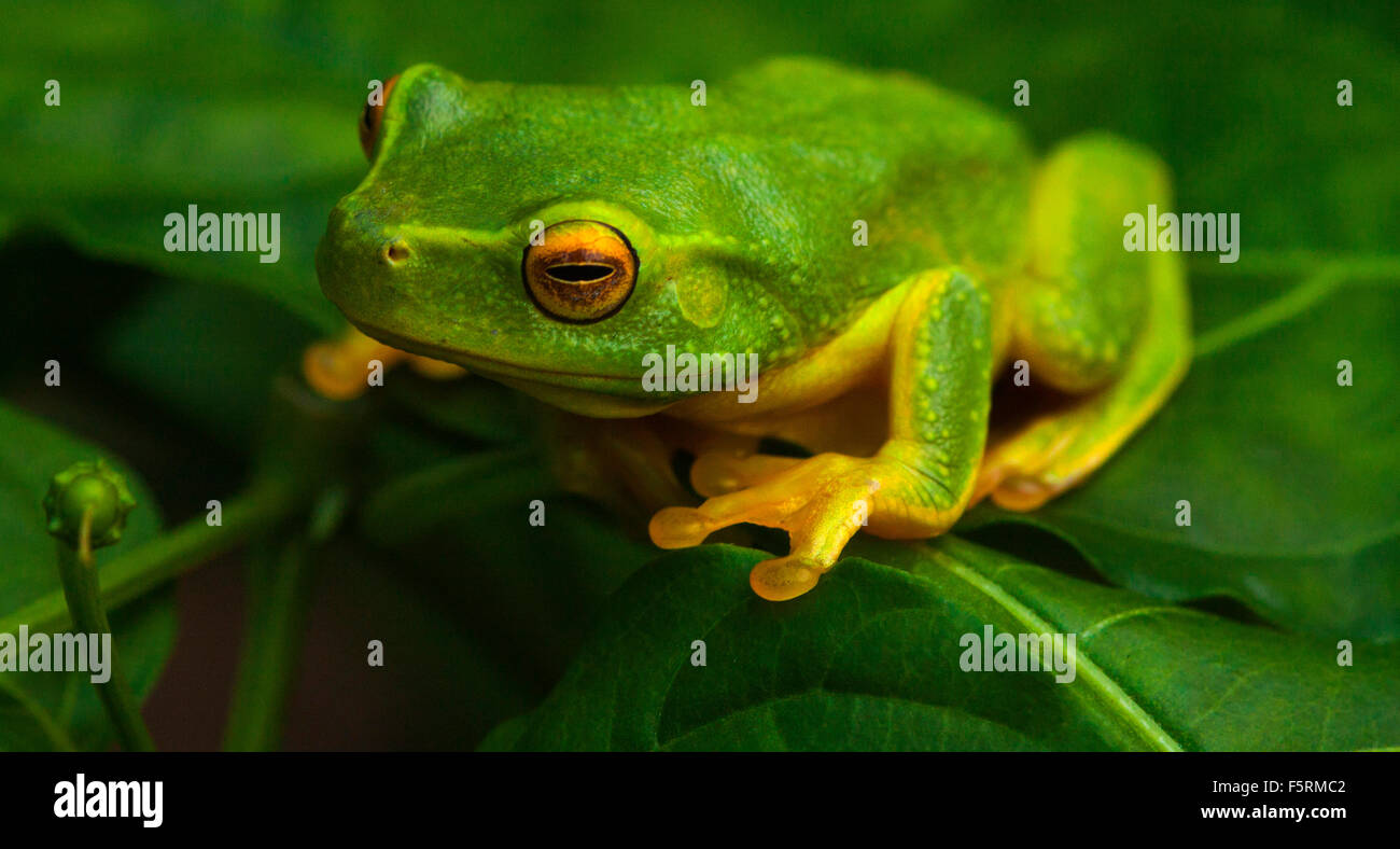 one green frog sitting on a bush Stock Photo