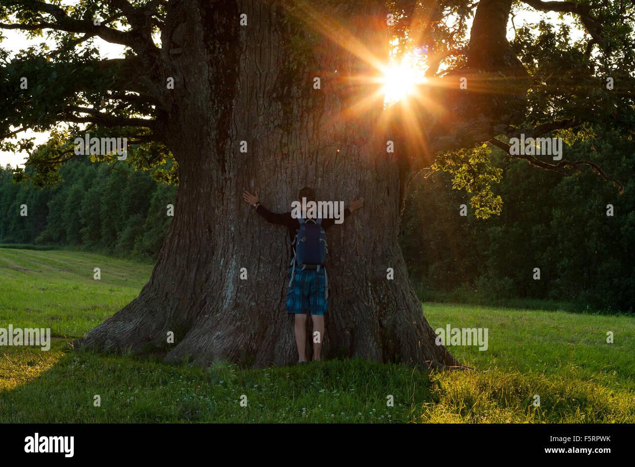 Man and stem of big grand oak - Stock Image
