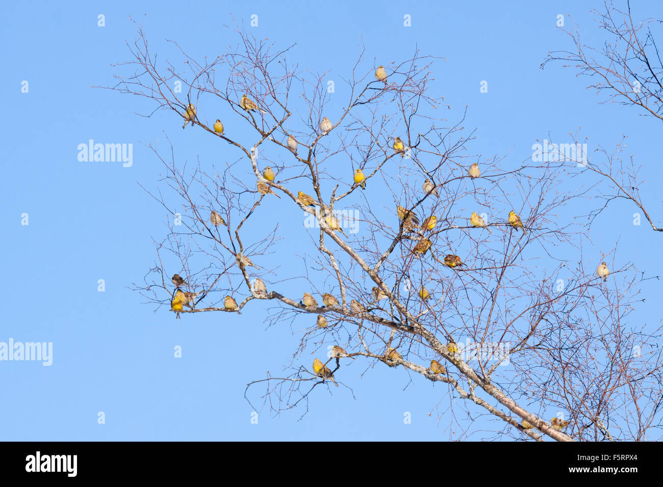 Passerine birds meeting - Stock Image